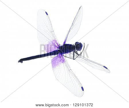 lilac dragonfly isolated on white background