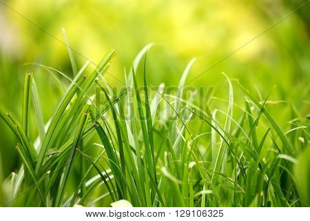 Green Grass Plant Leaf Background