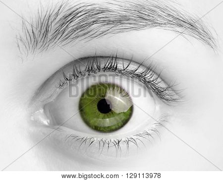 Macro image of wide open green eye, black and white photoMacro image of wide open green eye, black and white photo