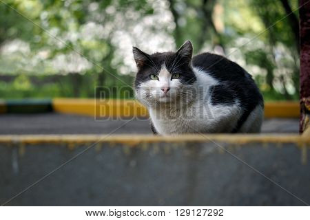 Black and white street cat. Cat wandering, sitting on the sidewalk. The concept of the problem of homeless animals