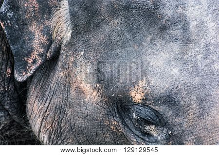 Detail photo of elephant face. Animal theme. Natural scene. Beauty in nature.