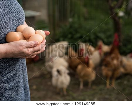 Woman farmer holding fresh organic eggs. Close up