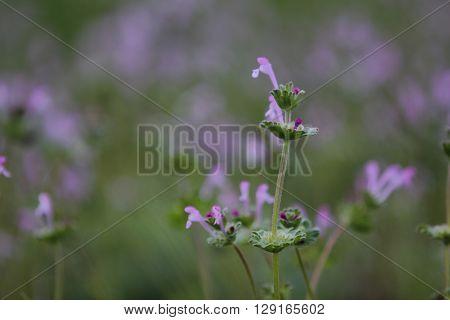 forest green fluffy stem with violet flowerets