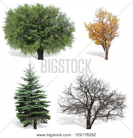 Trees at spring or summer, autumn and winter seasons,  isolated on white
