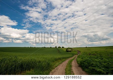 country road in a green field of wheat and spring sky - copy space