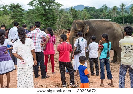 Pinnawela Sri Lanka - December 9 2012: Local visitors in the Elephant Nursery