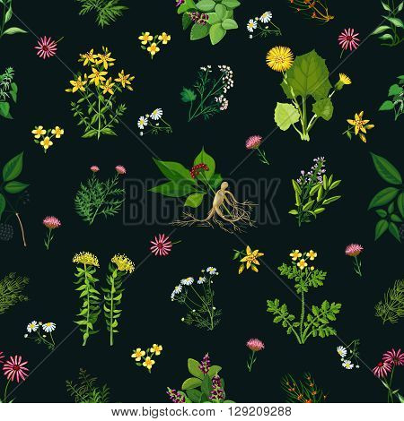 Seamless color pattern with dark background depicting different medicinal herbs vector illustration
