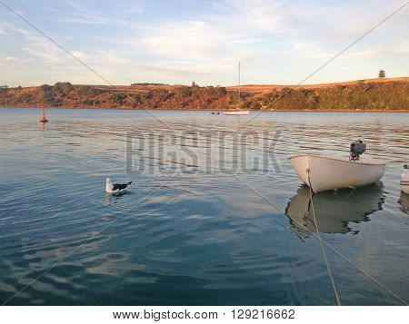 A rowing dinghy and seagull in a tranquil bay at dusk. Photographed at Islington Bay, between Rangitoto Island and Motutapu Island, New Zealand.