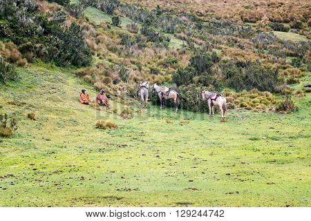 Horses And Tourists