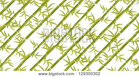 Bamboo plant seamless diagonal pattern. Bamboo sticks japan forest dense backdrop on white.