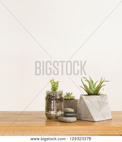 Succulent plants and stones home decor in house