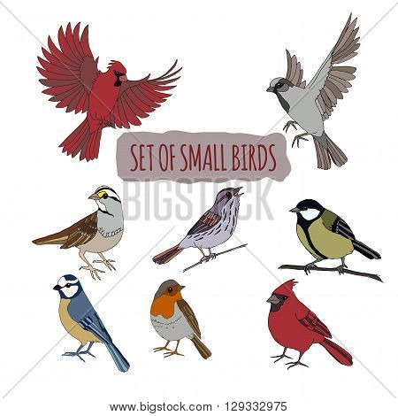 Set of hand drawn sitting and flying small birds. Features cardinal bird, robin, tit and sparrow. Great for bird watch illustrations and little cute additions to your design.