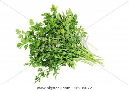 Bunch Of Parsley Isolated On The White Background