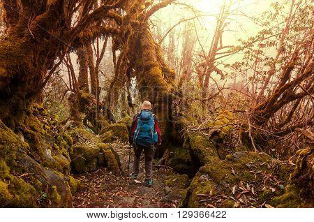 Hiker in Himalayan jungles, Nepal, Kanchenjunga region