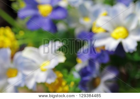 This is photo flower blur and garden .