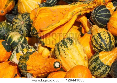 Photo shows detail view of various pumpkins in the farmers market.
