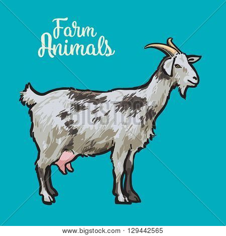 Farm pet goat sketch drawn by hand, cattle, milk and goat meat, goat meat, one farm horned animal on a blue background, illustration livestock - goats.