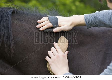 Young boy is grooming brown horse hair