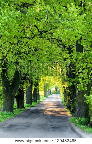Green Spring Trees In Alley