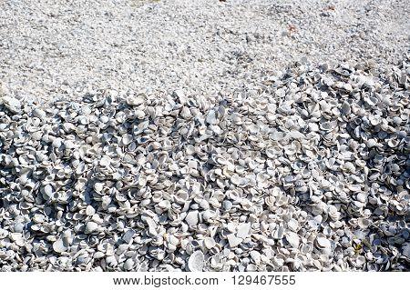 Large Mound Of Sea Shells Background