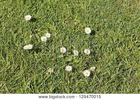 Pests parasite grass garden nature green gardening