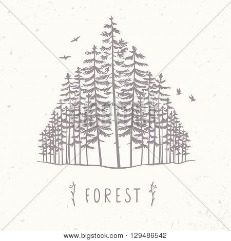 Forest Of Tall Trees