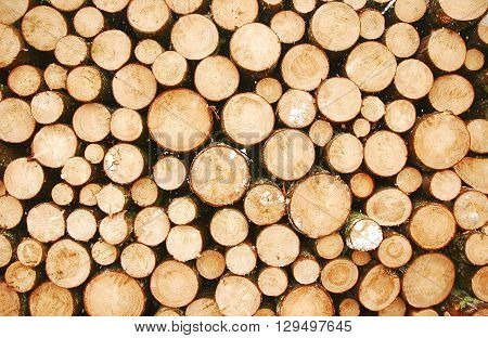 A cross-section of a pile of round logs waiting to be transported
