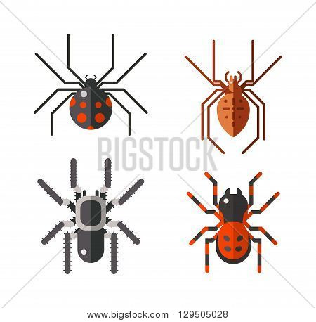 Vector poisonous spiders. Poisonous spiders arachnid danger isolated nature and fear insect poisonous spiders. Poisonous spiders leg phobia dangerous scary. Poisonous spiders horror poison.