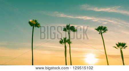 Retro effect image sun hsetting on horizon through tropical palms along Californian beaches.