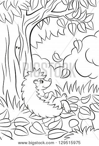 Coloring pages. Little cute kind hedgehog sits near the tree. Its autumn. The leaves fall from the tree. There are bushes plants grass and mushrooms around. The hedgehog is happy.