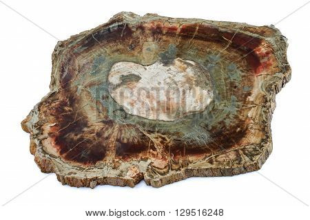 Large piece of fossil wood , isolated background