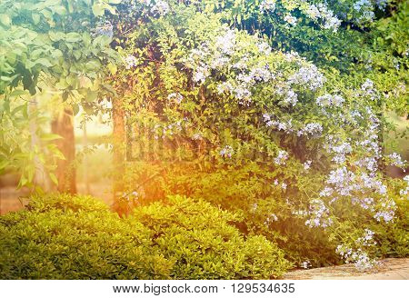 a beautiful green forest in the spring sunshine