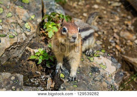 Cute little chipmunk sitting on a rock