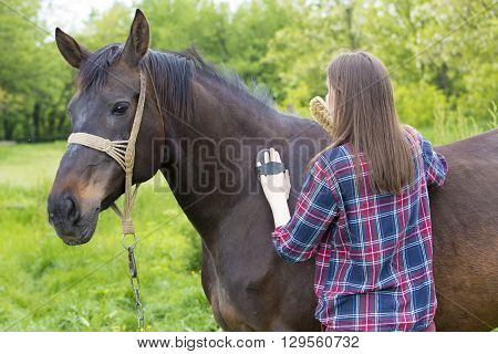 Young girl is grooming brown horse hair