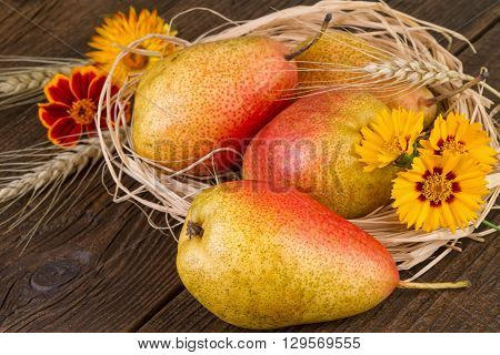Ripe pears in a straw nest. Decoration for Thanksgiving Day.
