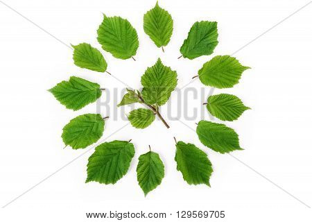 Green leaves bright pattern in round shape on white. Flat lay top view.