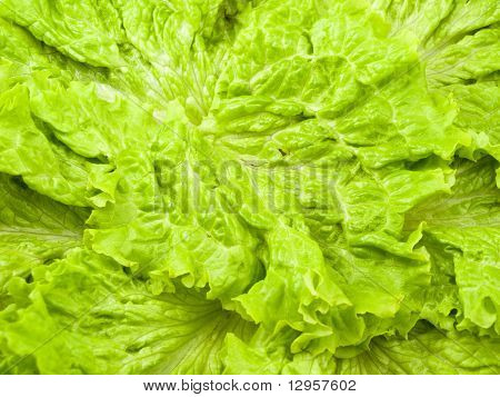 It Is A Lot Of Salad Leaves