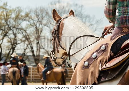 In the saddle horse on Western race beautiful paint horse in a barrel racing event at a rodeo in Mitrov Czech republic