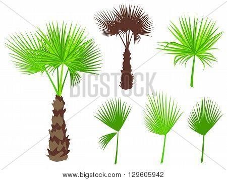 Set of fan palm round leaves. Fan Palm Tree formed from these leaves. On white background.