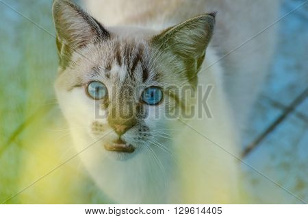 Cute Cat With Blue Eyes Playing Inside An Empty Pool
