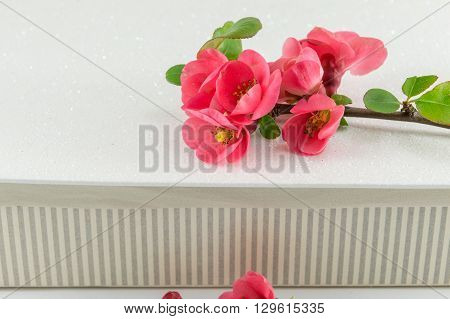 Japanese rose flowers on paper a box