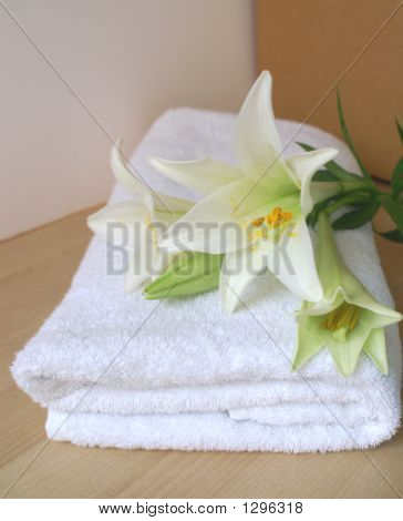 Lilly And Towel