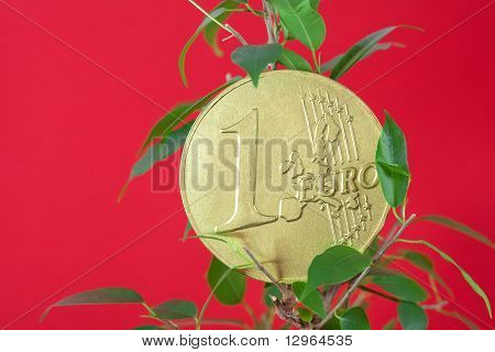 Ficus  And One Euro Coin On A Red Background