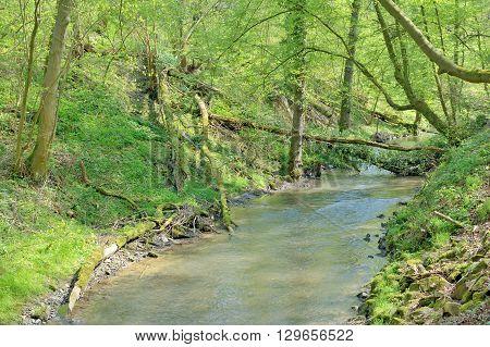 Duessel Creek in famous Neanderthal Valley near Erkrath, Mettman and Duesseldorf,North Rhine Westphalia,Germany