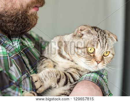 Strong bearded man holding a scottish fold which deviseth escape poster