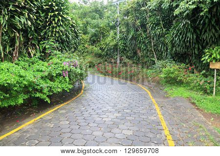 cobbled stone road in a tropical forest