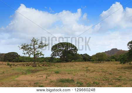 savanna in Central America turned into pasture