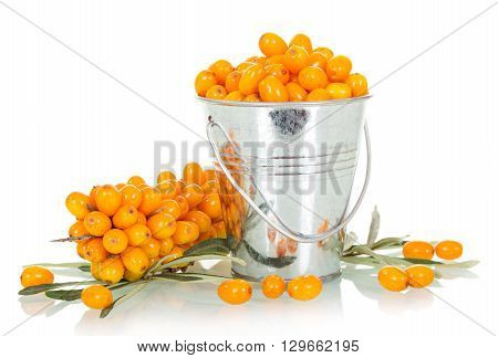 Fresh berries of sea-buckthorn in bucket isolated on white background