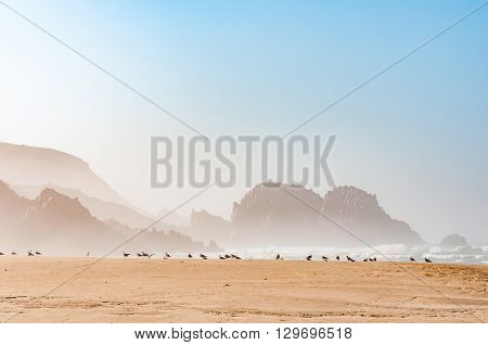 A hazy view of rocks in the sea at the beach in Noetsie with seagulls in the front