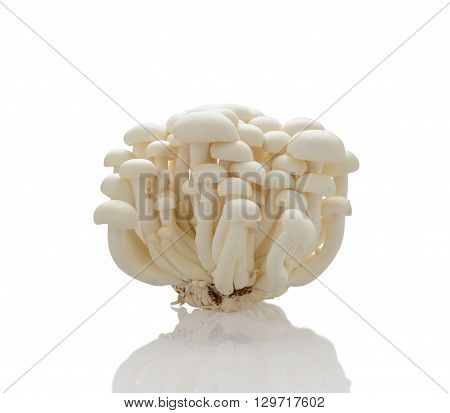White shimeji mushrooms on over white background